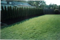 Ciaglia Landscape Design - Existing Lawn Repair