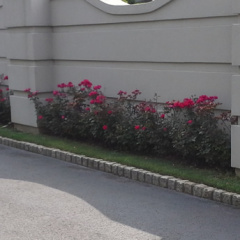 Ciaglia Landscape Design, Seasonal Planting, Matawan NJ Landscaping
